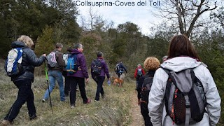 COLLSUSPINA - COVES del TOLL